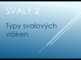 svaly2