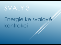 svaly3